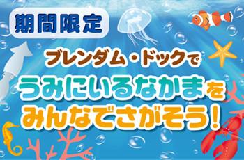 ★ブレンダム・ドックで海のなかまさがし☆